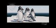 Strike - Little penguin hugging a Magellanic penguin