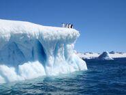 Devil-island-iceberg-weddell-sea-adelie-penguins-antarctica 34421 600x450