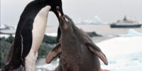 Penguin/Gallery