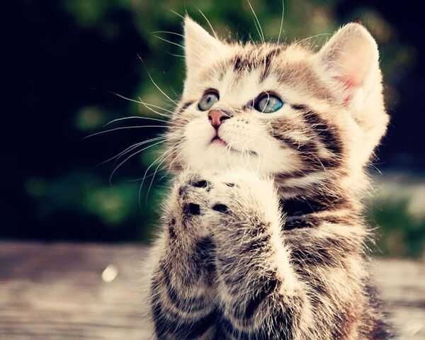 File:Anime-kittens-cats-praying-496315.jpg