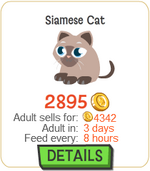Siamese Cat New
