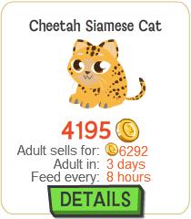 File:Cheetah Siamese Cat New.png