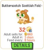 Butterscotch Scottish Fold Cat New