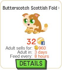 File:Butterscotch Scottish Fold Cat New.png