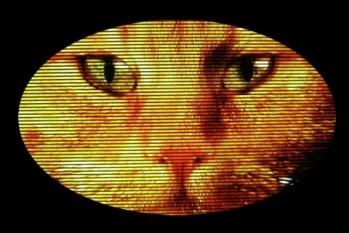 File:Cheshire Cat logo.jpg