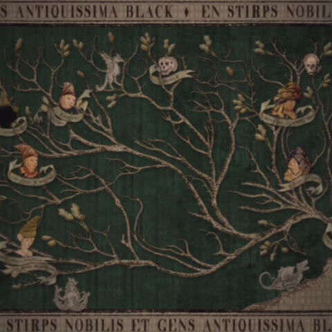 Древо Блэков на стене. Здесь видны наиболее древние предки