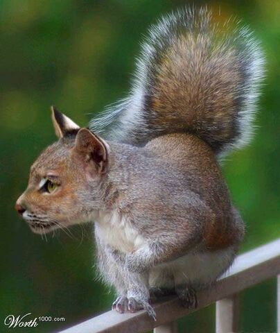 File:Cat-squirrel.jpg
