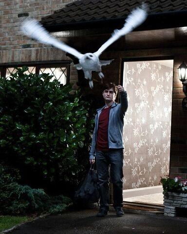 File:Hedwig flight.jpg