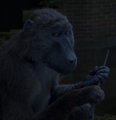 Baboon FB-F.png