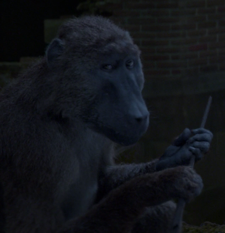 File:Baboon FB-F.png