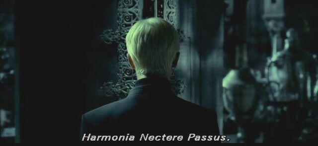 File:Harmonia Nectere Passus.JPG