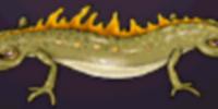 Tvåsocklad vattensalamander