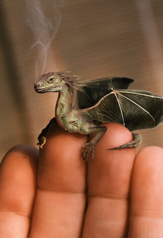 File:Baby-dragon.jpg