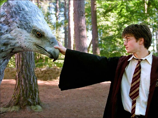 File:Harry buckbeak5.jpg
