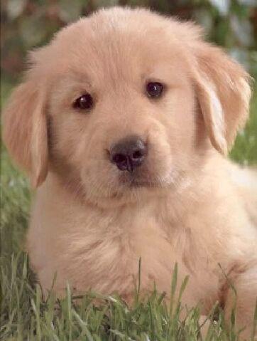 File:Puppie.jpg