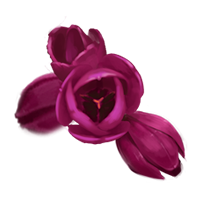 File:FlowerHeads.png