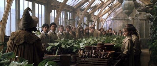 File:Professor Sprout greenhouse 1.jpg