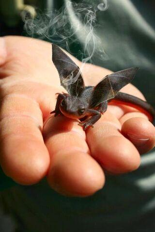File:Baby dragon.jpg