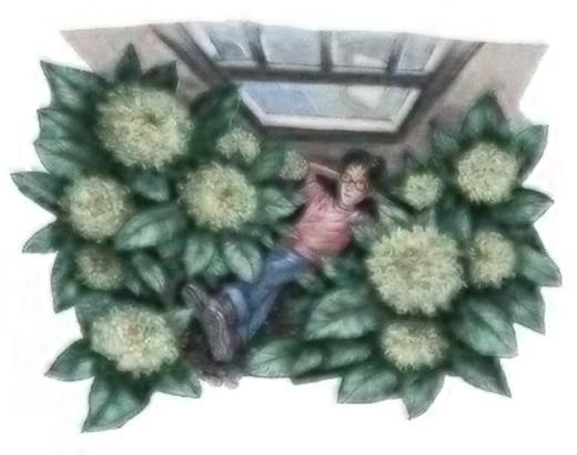 File:Hydrangea.jpg