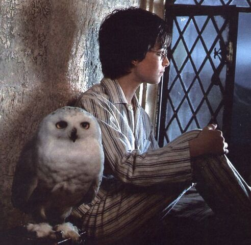 Bestand:Harry-potter-and-hedwig.jpg