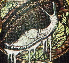 File:Flesh-Eating Slug.jpg