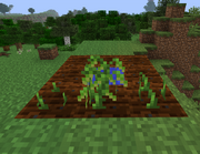 Peas Growth