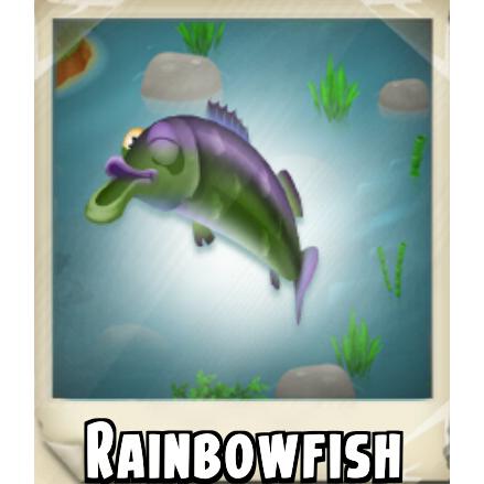 File:Rainbowfish Photo.png