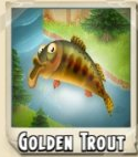 Golden Trout Photo