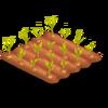 Corn Stage 1
