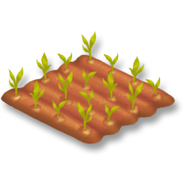 File:Corn Stage 1.png