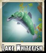 Lake Whitefish Photo