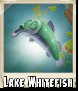 File:Lake Whitefish Photo.png