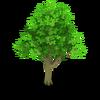 Apple Tree Stage 1
