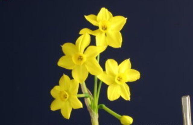 File:Flowerful.jpg