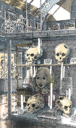 Pitt-Rivers museum trepanned skulls