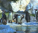 On Penguin Pond