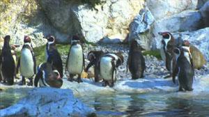 File:On Penguin Pond.jpg