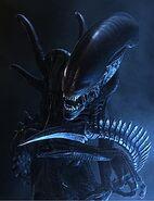 Xenomorph 001