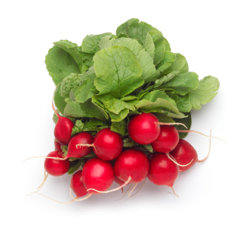 File:Red radish.jpg
