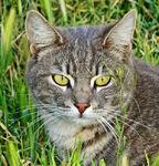 Eyes Green as Grass 3-15-15a
