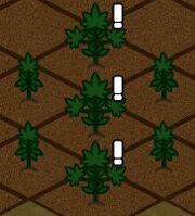 Tri Verde