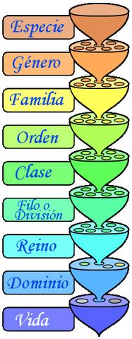 Archivo:Categorías taxonómicas.png