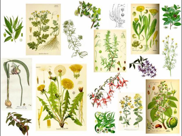 Archivo:Plantasmedicinales.jpg