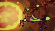 Ants 081