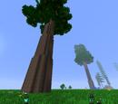 Redwood Tree (Natura)