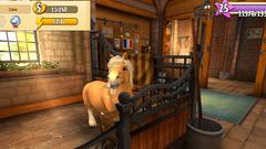Shetland Pony 2