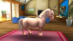 Dartmoor Pony 2