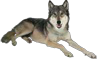 File:HO RomanyCamp Wolf-icon.png