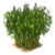 Marketplace Bamboo-icon.png