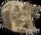 HO TitanicSunDeck Cat-icon